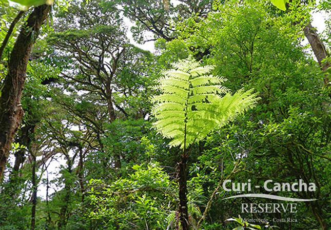 Curi Cancha – Feuchtregenwald