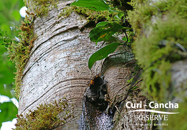 Curi Cancha – Primär Regenwald