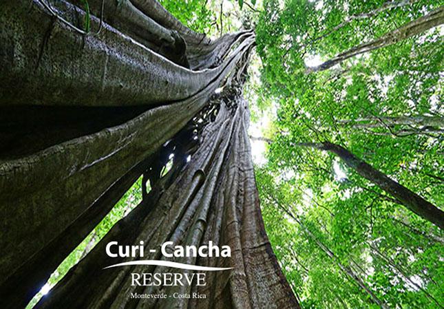 Curi Cancha – Urwald Riese