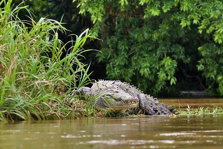 Floating – Tres Amigos Krokodil