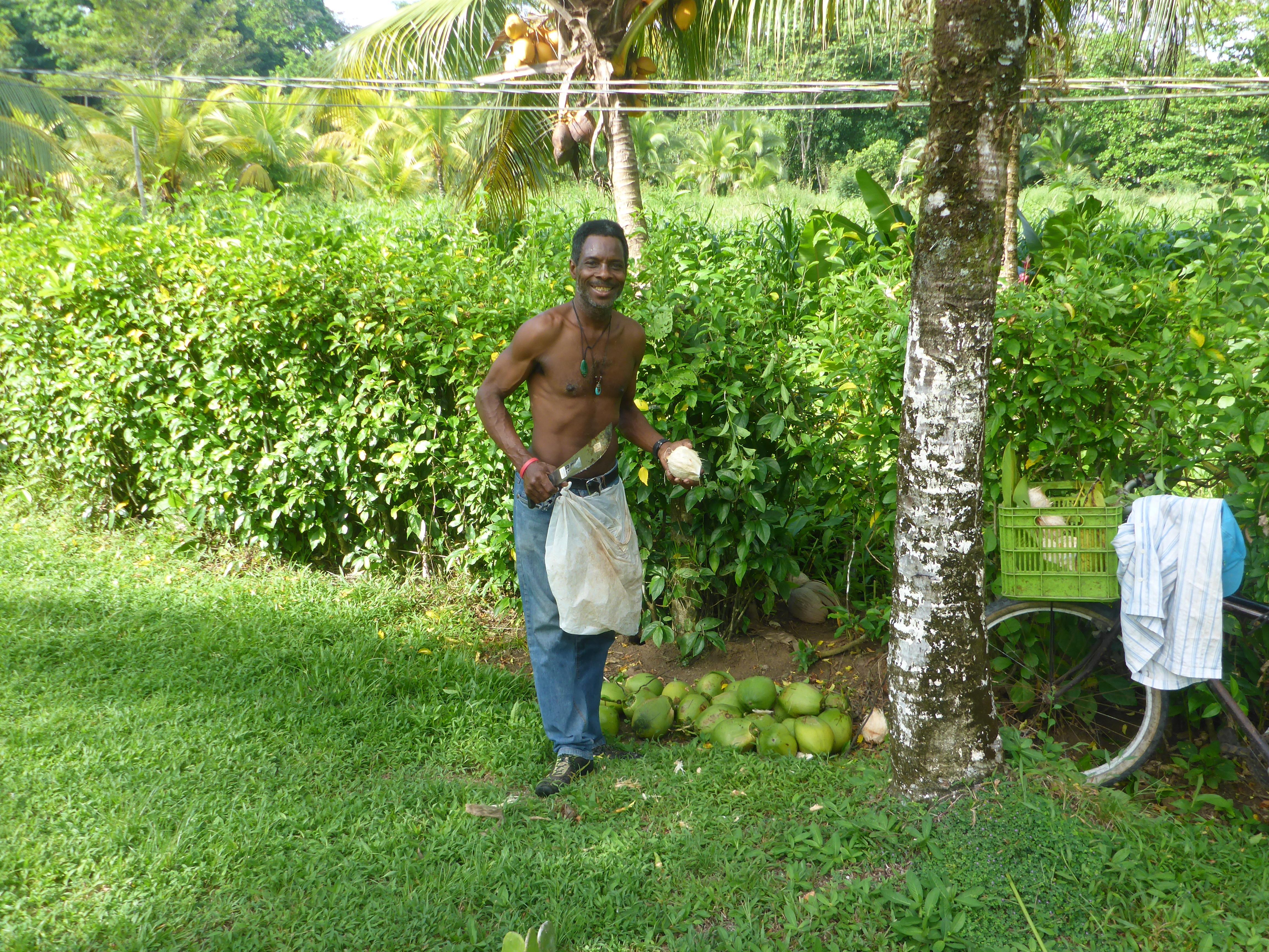 Ticos – Karibik
