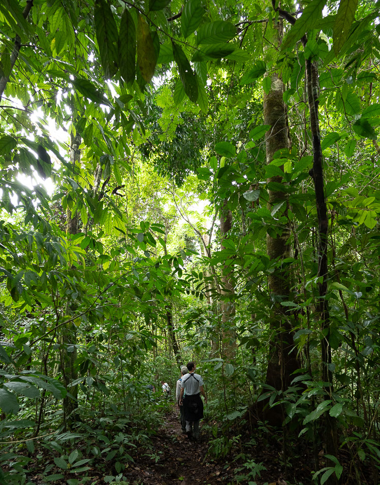 2019_07_30_jungle_tour_hike-crop-u6810