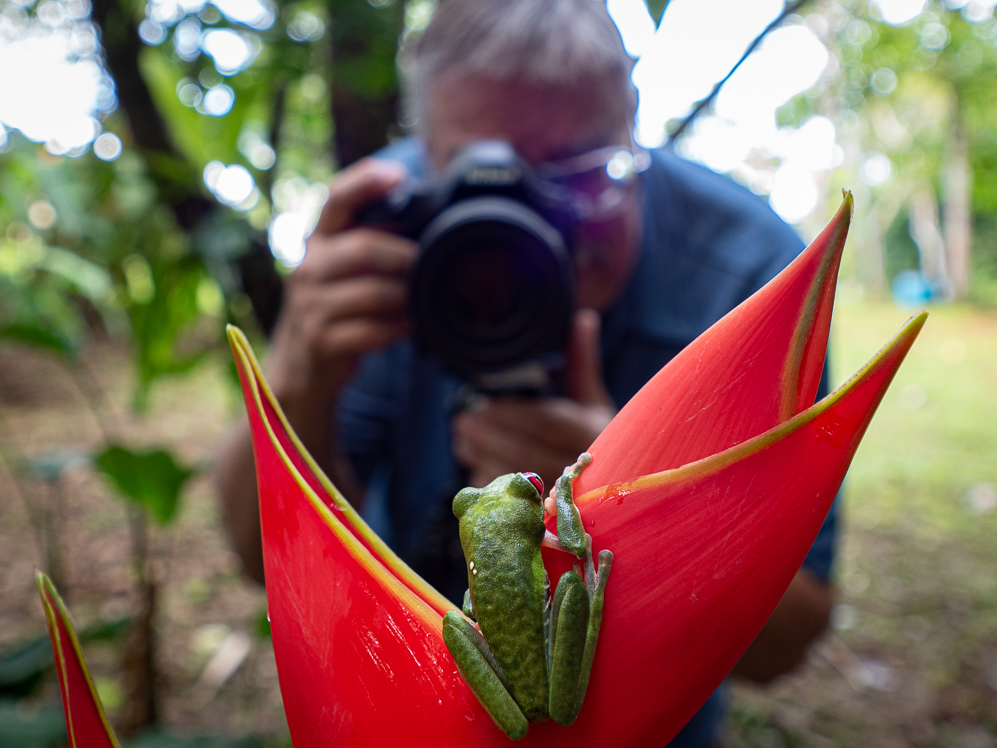 2019_07_30_red_eyed_tree_frog