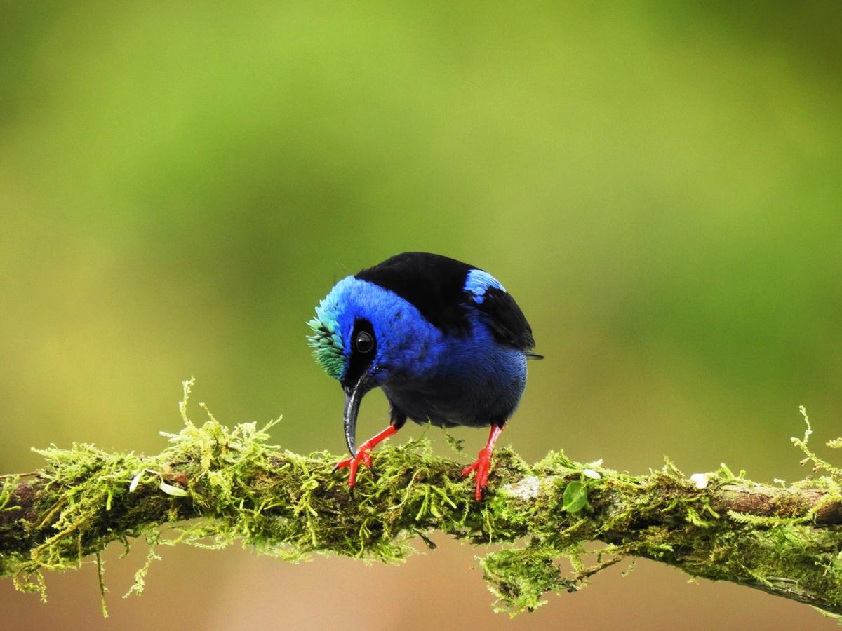 arenal-guide-piere-flycatcher-bird