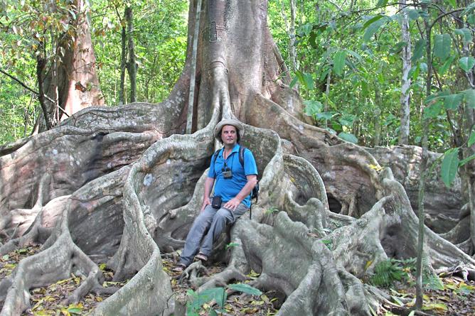 uli-roth-regenwald-baum-costa-rica