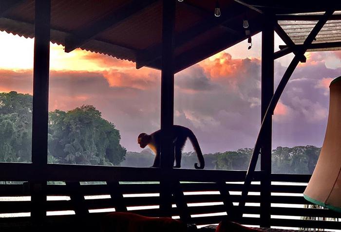 costa-rica-micha-siegfried-tortuguero-selva-monos