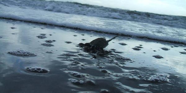 costa-rica-micha-siegfried-turtle-tour-tortugas